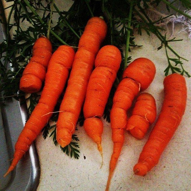 urban gardening, carrots